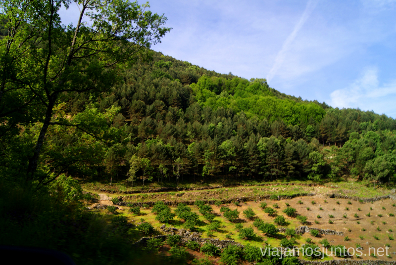 Cerezos, cerezos, y más cerezos Ruta en 4x4 por lo alto del Valle del Jerte, Extremadura