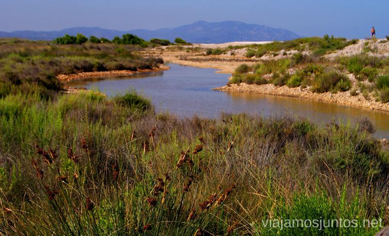 Los humedales Dos rutas en bicicleta en los alrededores de Oropesa del Mar, que hacer en Castellón, Valencia