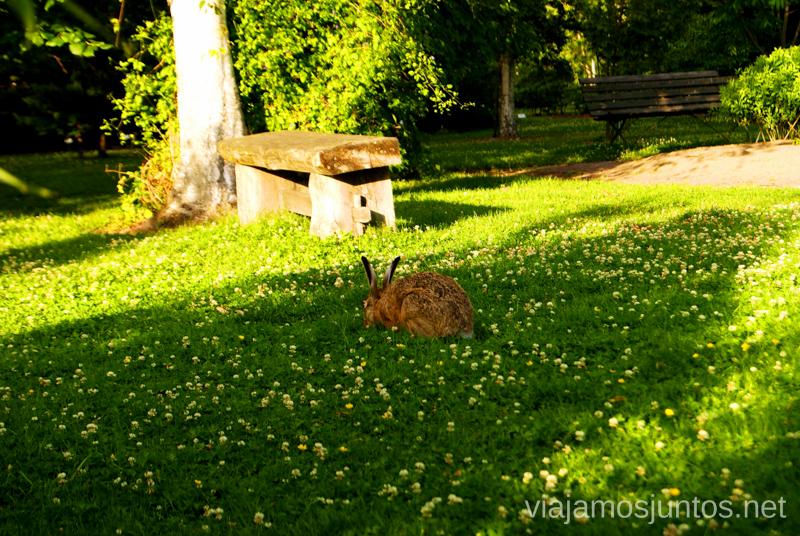 ¡Un liebre! Que ver y que hacer en Uppsala, Suecia. Atracciones turísticas. Visitas.