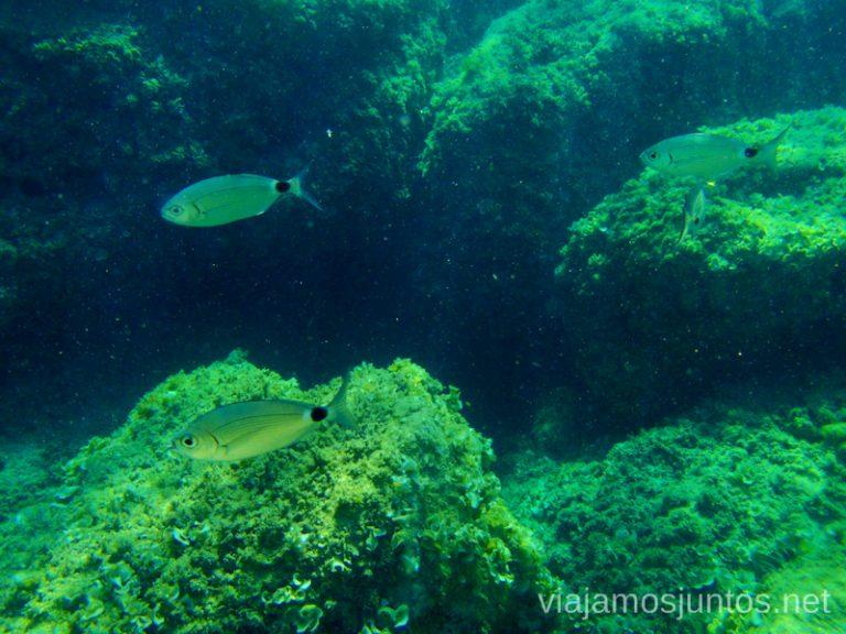 ¡Un pez! Ruta desde Les Rotes hasta laa Cueva Tallada a pie. Denia. Valencia