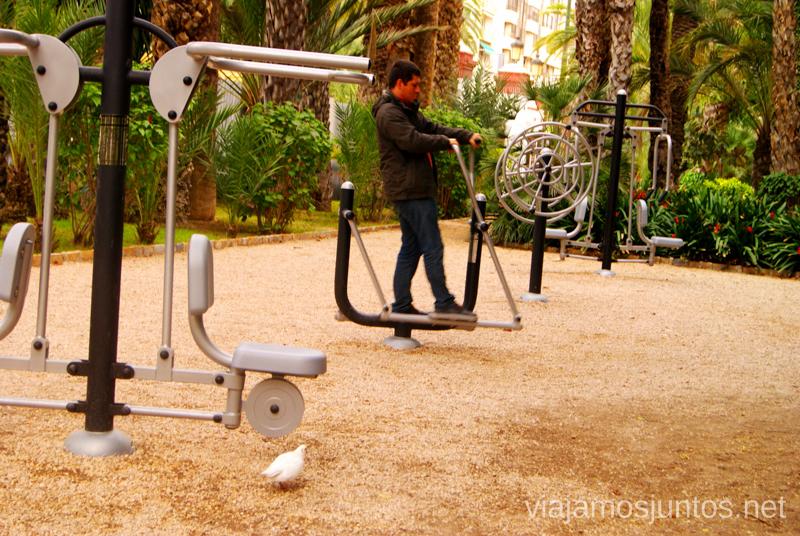 Zona de niños :) Que ver y que hacer en Elche, Alicante, Valencia. Datos prácticos.