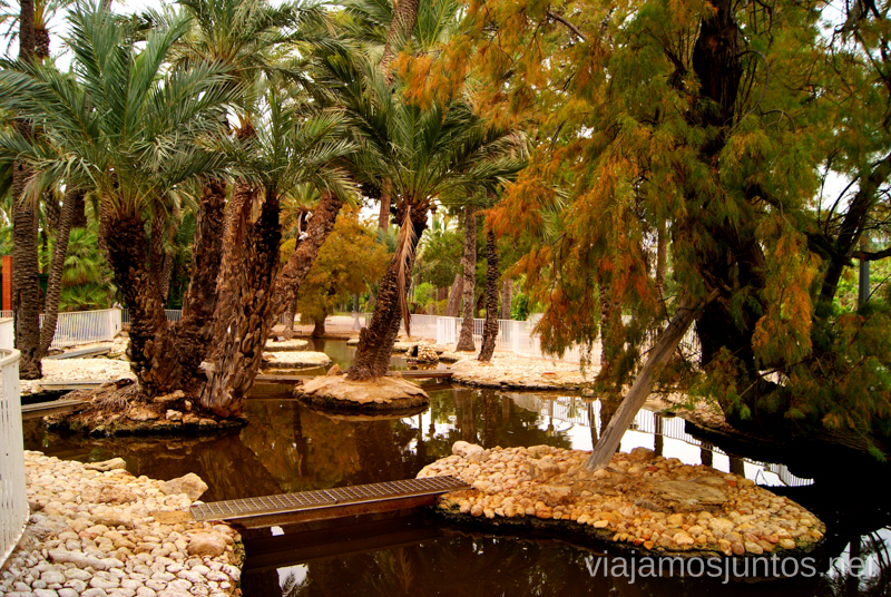El estanque del Parque Municipal Que ver y que hacer en Elche, Alicante, Valencia. Datos prácticos.