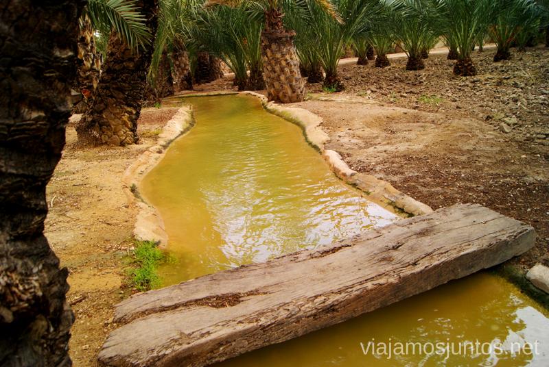 Las sequías, un elemento importante de cualquier palmeral Que ver y que hacer en Elche, Alicante, Valencia. Datos prácticos.