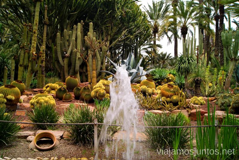 La zona de Cactus, con agua fresquita Que ver y que hacer en Elche, Alicante, Valencia. Datos prácticos.