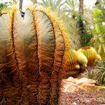 ¡Cactus! De todas formas y tamaños Que ver y que hacer en Elche, Alicante, Valencia. Datos prácticos.