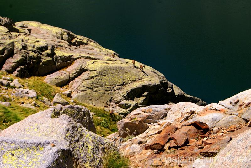 Las cabras y las aguas oscuras de la Laguna Nº5 Trekking de 3 días por Gredos, Castilla y León, historias y anécdotas de la ruta