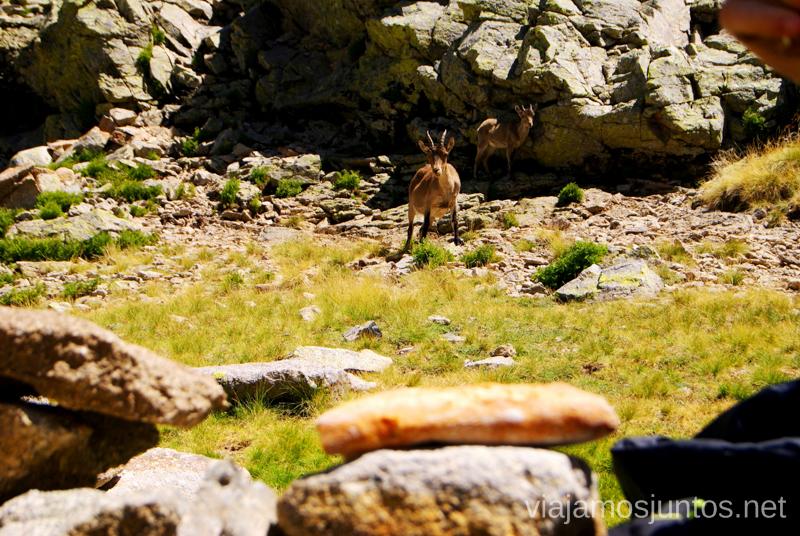 La tentación... Trekking de 3 días por Gredos, Castilla y León, historias y anécdotas de la ruta