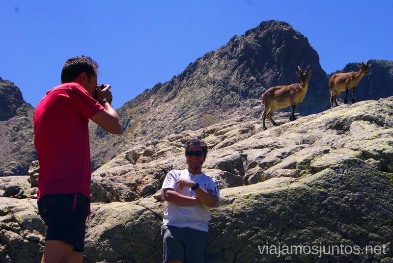Javier, el cabrero, posando con cabras Trekking de 3 días por Gredos, Castilla y León, historias y anécdotas de la ruta