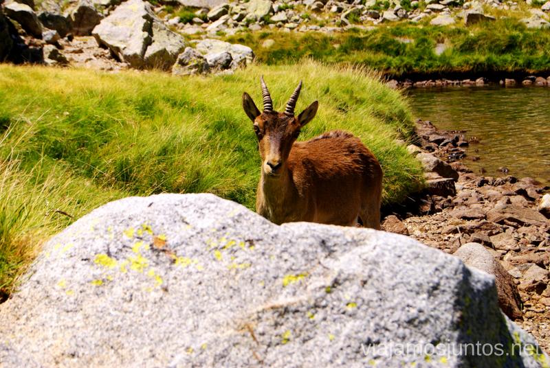 Acercamiento... Trekking de 3 días por Gredos, Castilla y León, historias y anécdotas de la ruta