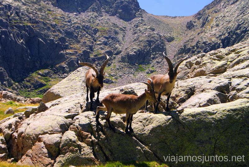 Los machos Trekking de 3 días por Gredos, Castilla y León, historias y anécdotas de la ruta