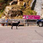 Cabras en el mirador del nacimiento del Asón Ruta circular en coche alrededor del Valle de Soba, Cantabria