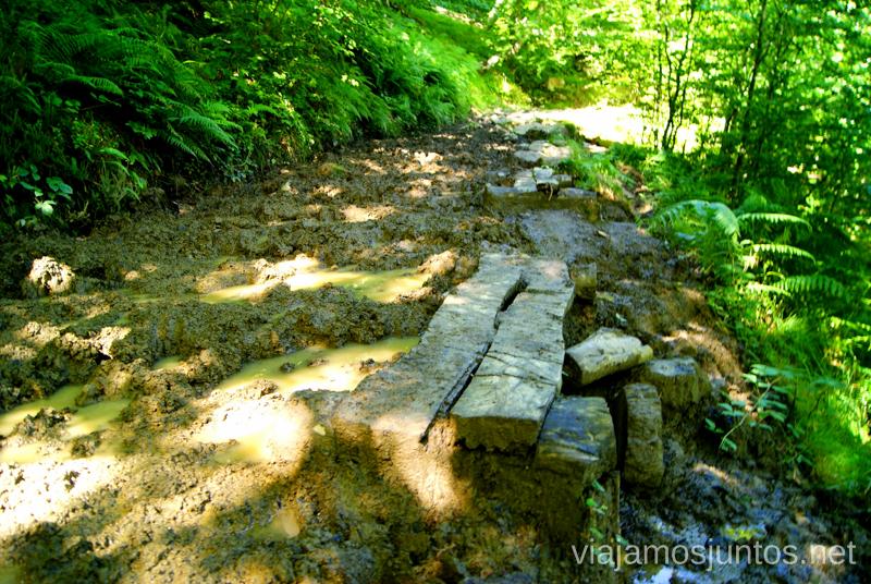 Barro y pasos de madera Ruta circular Vuelta a Colina, Parque Natural de los Collados del Asón, Cantabria
