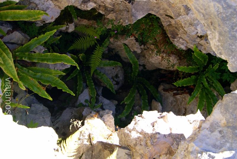 Creciendo... desde la oscuridad Ruta circular Vuelta a Colina, Parque Natural de los Collados del Asón, Cantabria