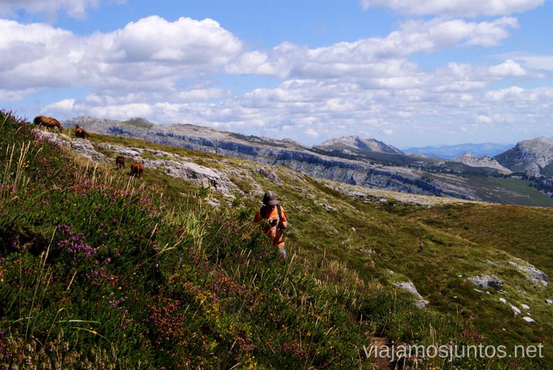 Caballos... de fondo....Ruta circular Vuelta a Colina, Parque Natural de los Collados del Asón, Cantabria