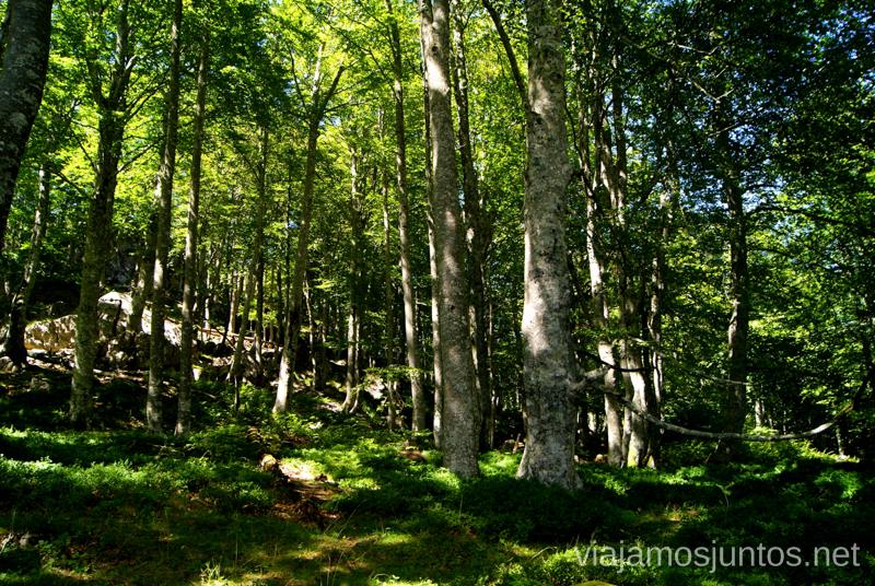 Hayedo Ruta circular Vuelta a Colina, Parque Natural de los Collados del Asón, Cantabria