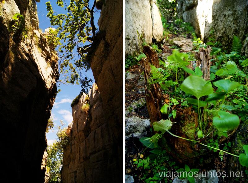 El cañón de paredes verticales Ruta circular Vuelta a Colina, Parque Natural de los Collados del Asón, Cantabria