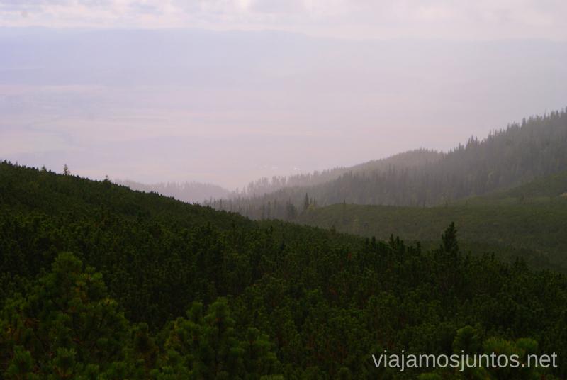 La ruta de vuelta por un bosque de pinos entre la lluvia y niebla Trekking en los Altos Tatras, Eslovaquia High Tatras, Slovaquia #EslovaquiaJuntos Parte III Diario