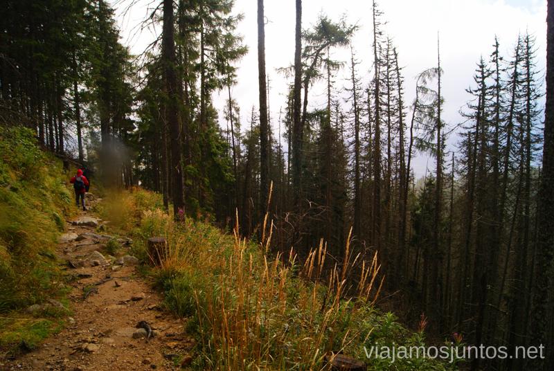 Los pinos esbeltos Trekking en los Altos Tatras, Eslovaquia High Tatras, Slovaquia #EslovaquiaJuntos Parte III Diario