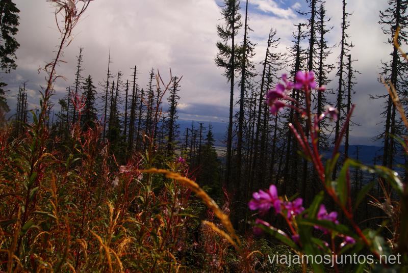 Los intensos colores de Altos Tatras Trekking en los Altos Tatras, Eslovaquia High Tatras, Slovaquia #EslovaquiaJuntos Parte III Diario