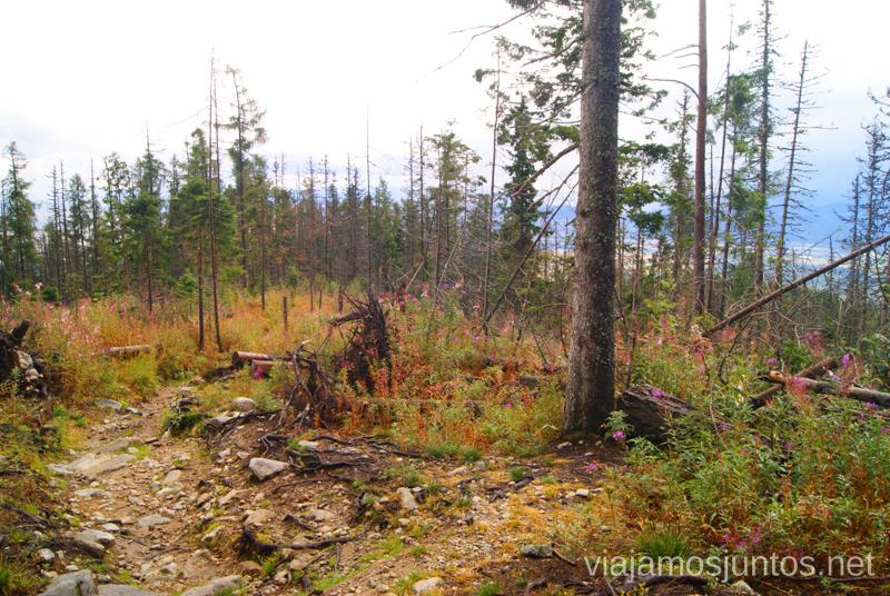 Bosque después del temporal Trekking en los Altos Tatras, Eslovaquia High Tatras, Slovaquia #EslovaquiaJuntos Parte III Diario