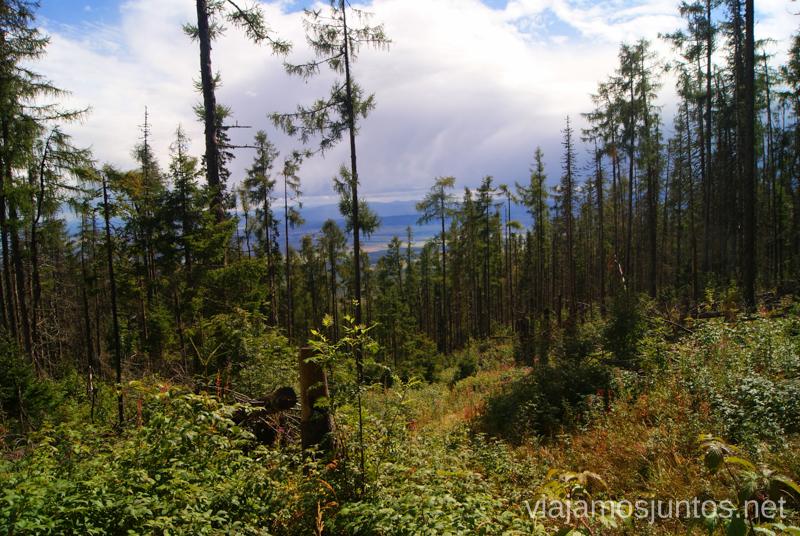 Cuando el bosque deja ver el horizonte Trekking en los Altos Tatras, Eslovaquia High Tatras, Slovaquia #EslovaquiaJuntos Parte III Diario