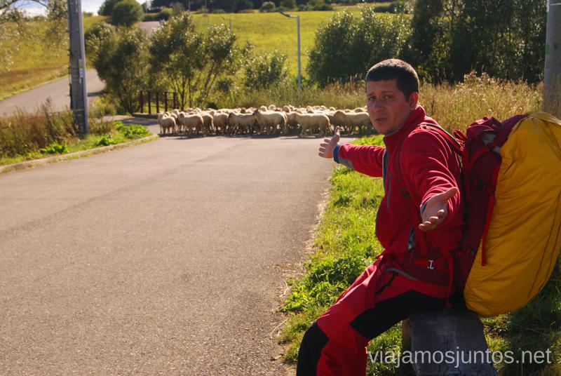 ¿Nos vamos o nos quedamos con las ovejas? Preparación del trekking de dos días por Altos Tatras, Eslovaquia. High Tatras, Slovakia