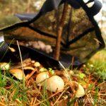 Malla para recoger setas Buscar setas en Madrid. Otoño 2015 Consejos prácticos