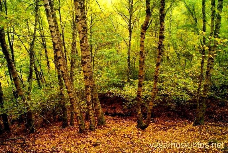 Paisaje de otoño setero Buscar setas en Madrid. Otoño 2015