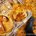 Cestas para recoger setas Buscar setas en Madrid. Otoño 2015 Consejos prácticos