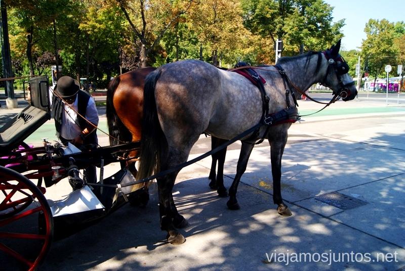 Paseo en el carruaje de caballos Viena en 24 horas, itinerario. Que hacer y que ver en Vienna