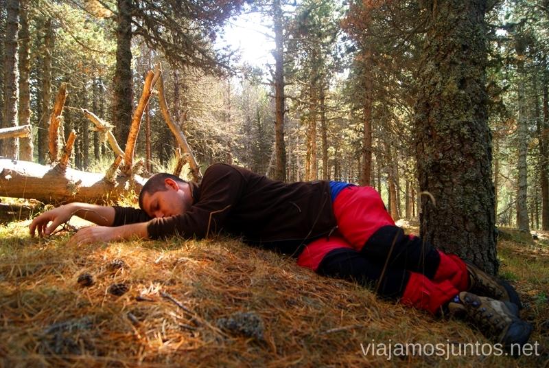 Un poco de descanso Los beneficios para la salud de recoger setas, otoño
