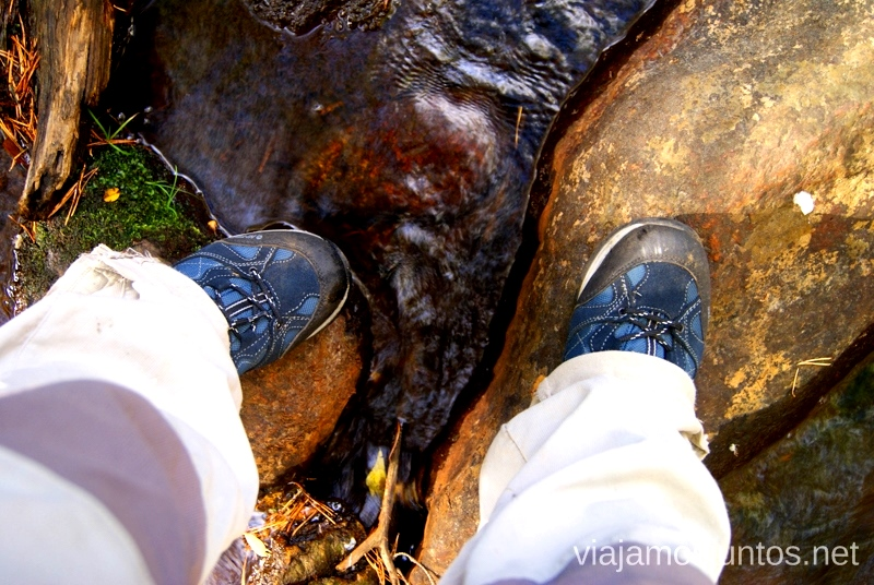Vadeando ríos Los beneficios para la salud de recoger setas, otoño