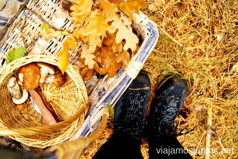 Paseos bonitos Los beneficios para la salud de recoger setas, otoño
