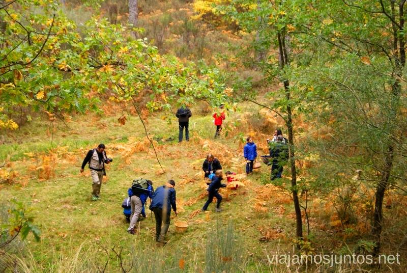 Todos juntos a por setas Los beneficios para la salud de recoger setas, otoño