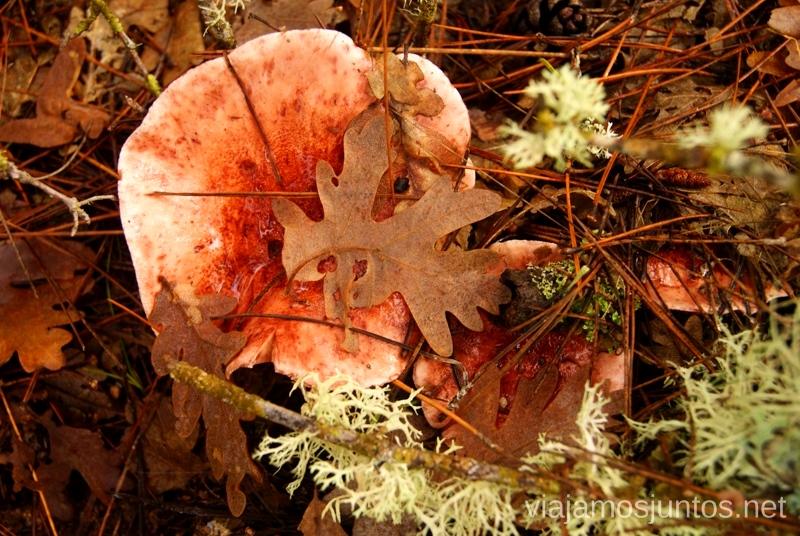 Seta bonita Los beneficios para la salud de recoger setas, otoño
