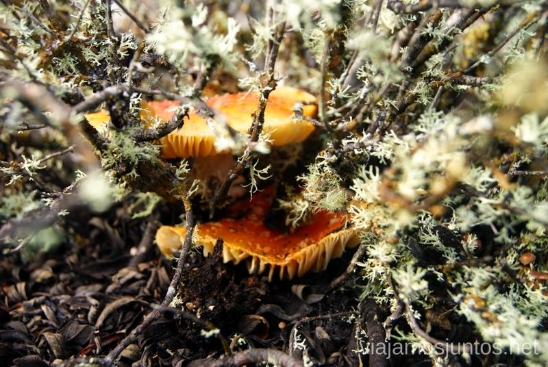Escondidos Los beneficios para la salud de recoger setas, otoño