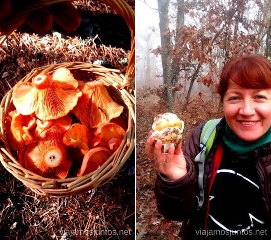 Lo aprendido este año: huevo de rey y níscalos Los beneficios para la salud de recoger setas, otoño
