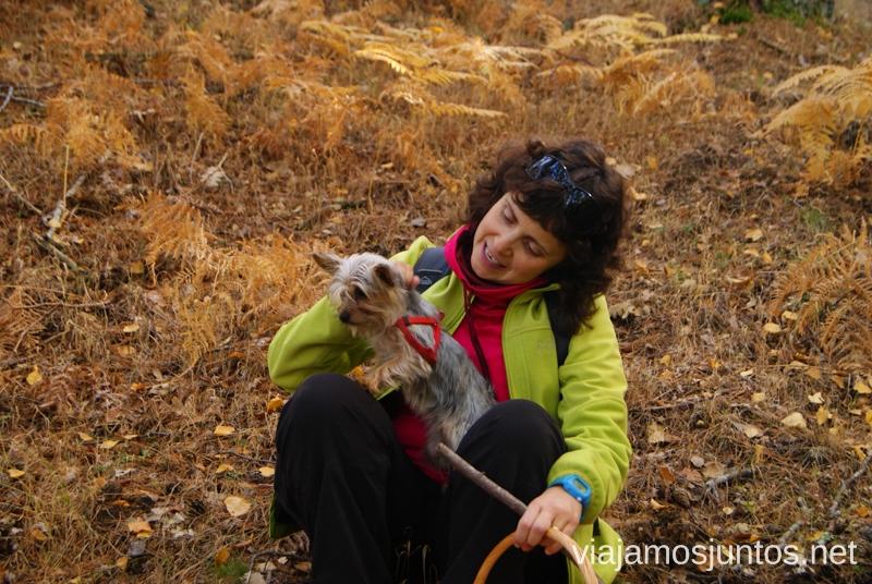 En buena compañía Los beneficios para la salud de recoger setas, otoño