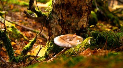 Otoño precioso Los beneficios para la salud de recoger setas, otoño