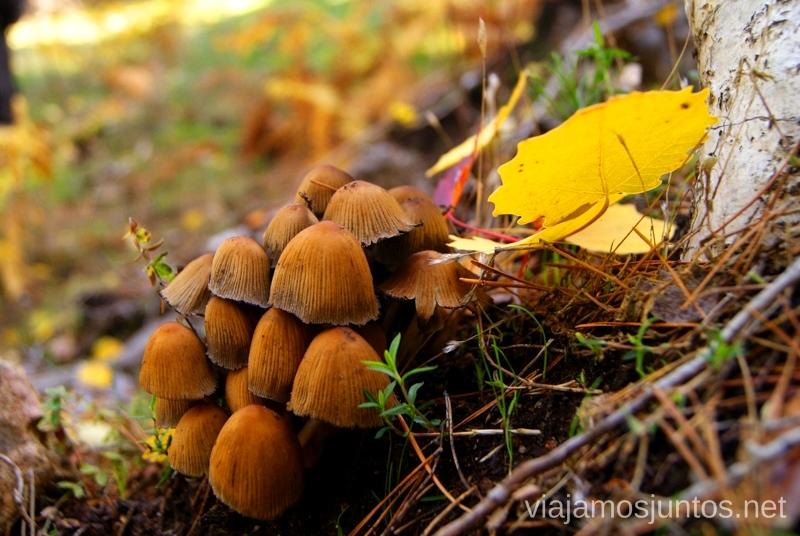 Otoño mágico Los beneficios para la salud de recoger setas, otoño