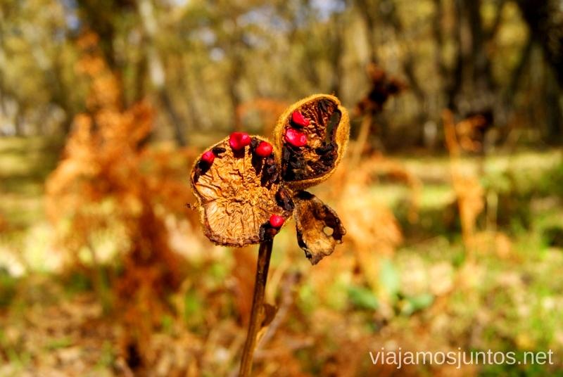 Las plantas que dan color al paisaje otoñal Descubriendo el Edén de la Mancha, el parque natural del Valle de Alcudia y Sierra Madrona
