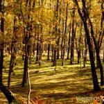 ¿Un paseo? Descubriendo el Edén de la Mancha, el parque natural del Valle de Alcudia y Sierra Madrona