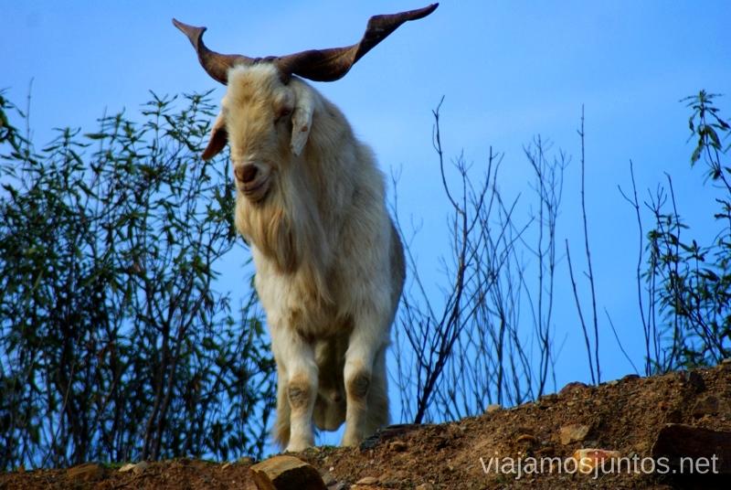 Vigilando Descubriendo el Edén de la Mancha, el parque natural del Valle de Alcudia y Sierra Madrona