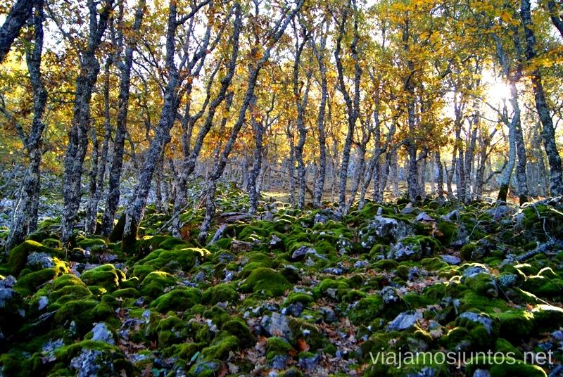 Bosque encantado Descubriendo el Edén de la Mancha, el parque natural del Valle de Alcudia y Sierra Madrona