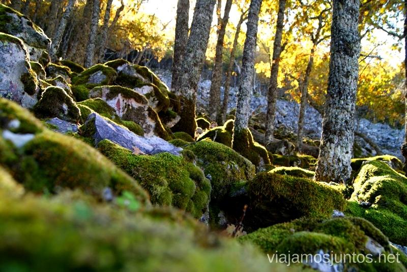 ¿Dónde están las hadas? Descubriendo el Edén de la Mancha, el parque natural del Valle de Alcudia y Sierra Madrona