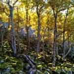 Momento foto y... madroño Descubriendo el Edén de la Mancha, el parque natural del Valle de Alcudia y Sierra Madrona