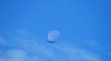 Luna y aves Descubriendo el Edén de la Mancha, el parque natural del Valle de Alcudia y Sierra Madrona