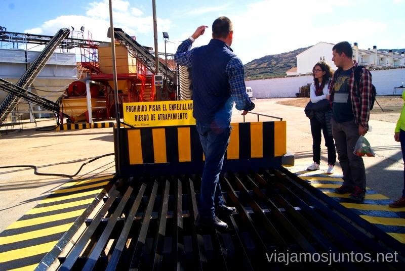 Almazara Aceites Baos Un itinerario de un día por Almodóvar del Campo, Ciudad Real, Castilla-la Mancha Que ver y que hacer