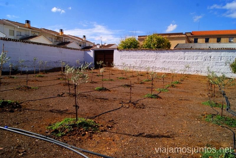 Olivos de muestra. Almazara Aceites Baos Un itinerario de un día por Almodóvar del Campo, Ciudad Real, Castilla-la Mancha Que ver y que hacer