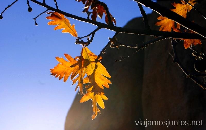 Últimos momentos de otoño Ruta el Yelmo Manzanares el Real Madrid